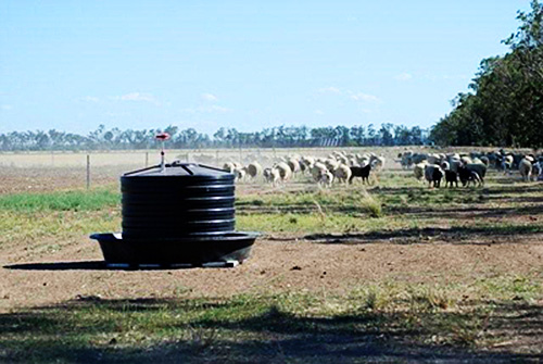 Dipstik showing the molasses level on a sheep property in southern Queensland.